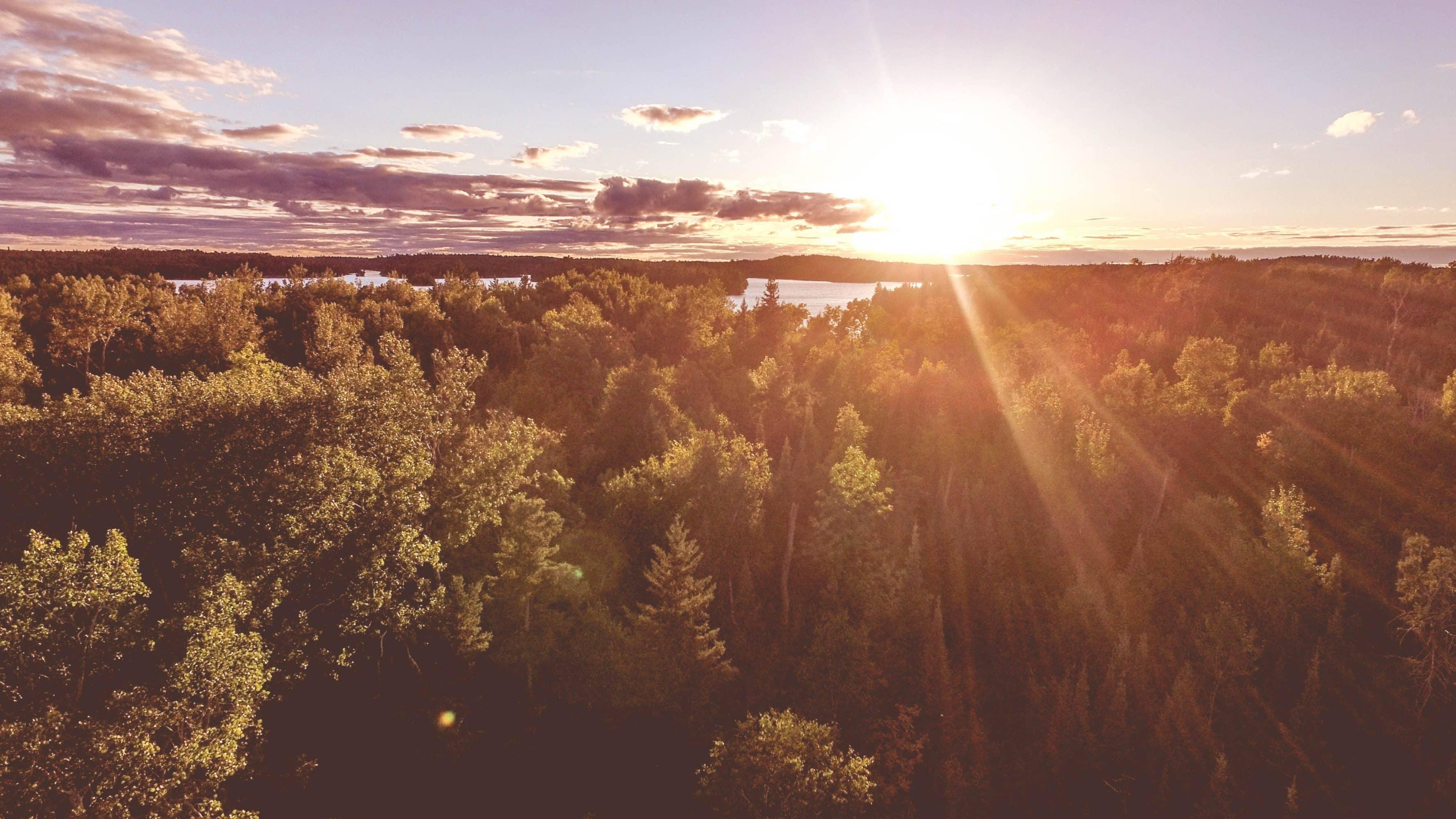 Solnedgång i horisonten bakom en skog